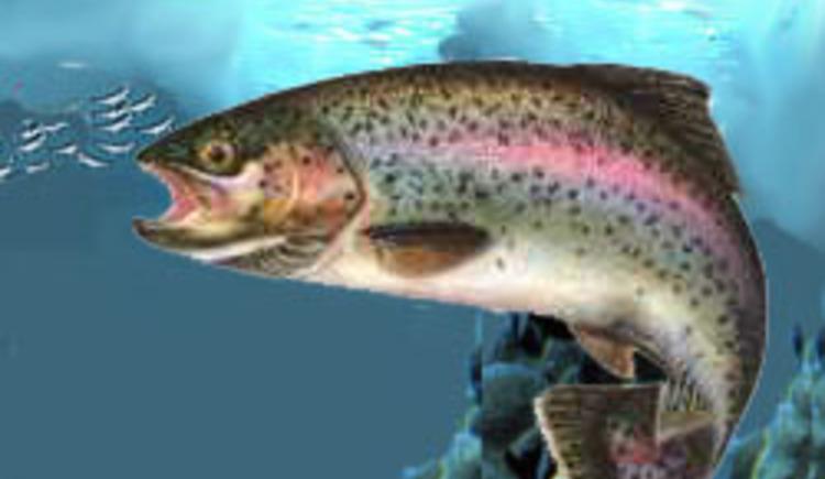 Fischzucht Köttl