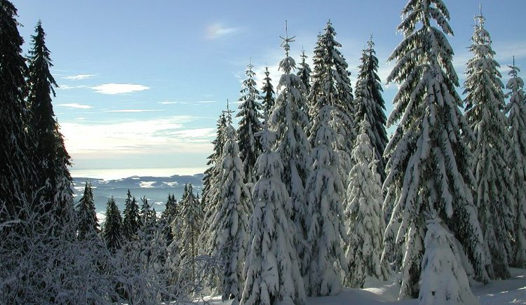 In der Skiarena am Hochficht können Sie diese Wanderung auch beginnen.