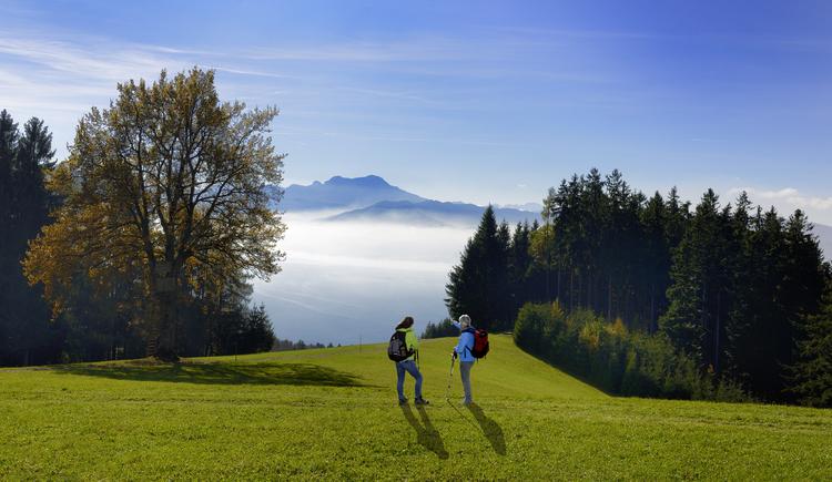 Ausblick zum Attersee (© MTV Ferienregion Traunsee)