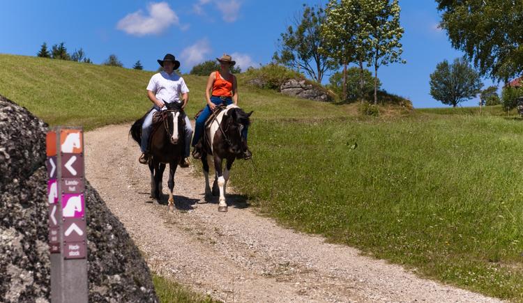 Wanderreiten (© OÖ Tourismus/Erber)