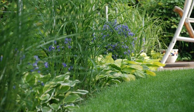 perennial, grass, meadow\n