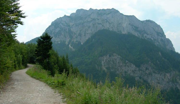 Auf dem Weg zum Laudachsee (© Oberösterreich Tourismus / green-solutions)