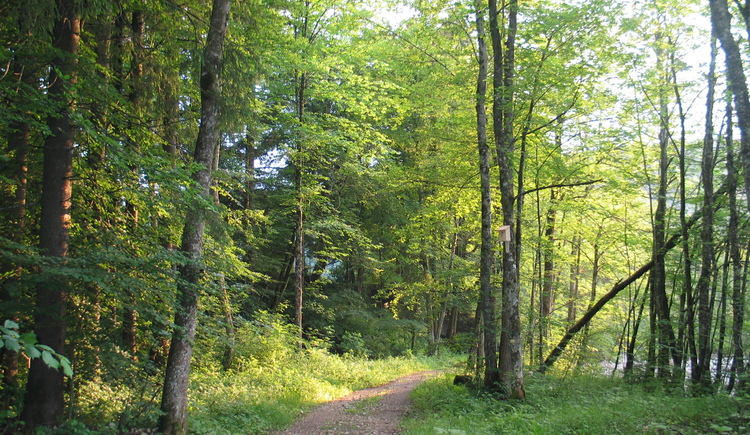 WaldWasserZauber_Hintersee (© fuschlseeregion/Hintersee/Hans Aschauer)