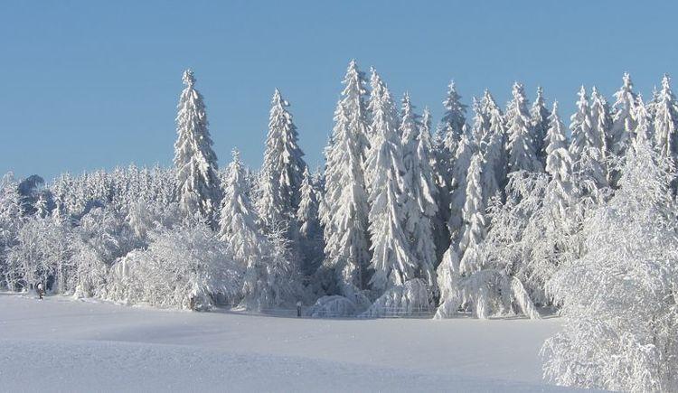 Wintermärchen (© Helma Esterhammer)
