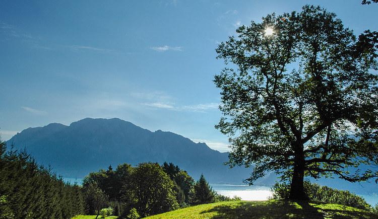 Kastanienwald. (© Erich Unteregelsbacher)