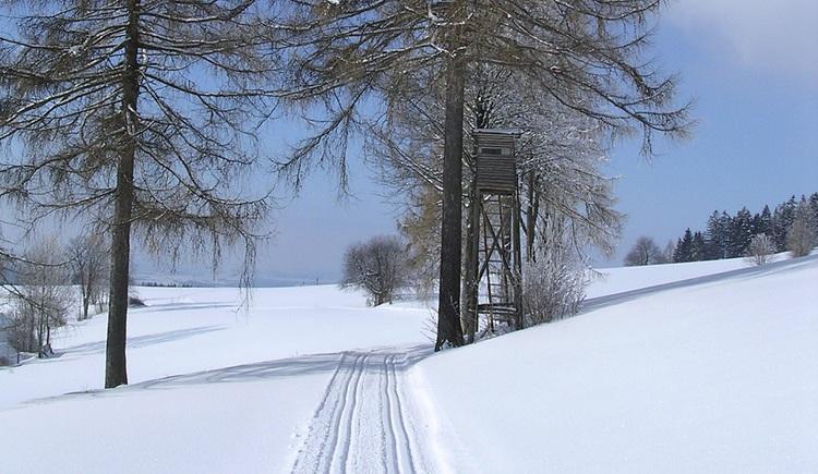 herrliche Loipen führen durch die verschneite Winterlandschaft von St. Stefan und Afiesl.