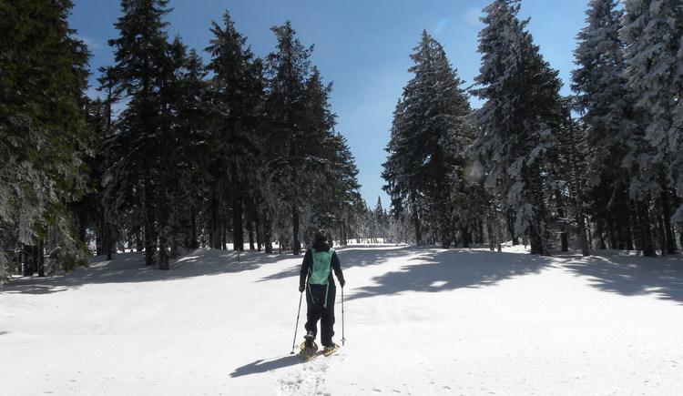 Über das tief verschneite Hochplateau stapfen und die Aussicht genießen! (© Ferienregion Böhmerwald)