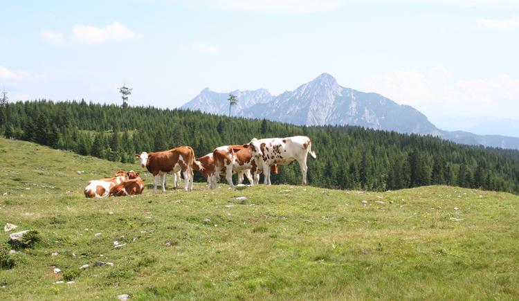 Labenbergalm mit Blick auf Retten- und Rinnkogel (© Gisbert Rabeder)