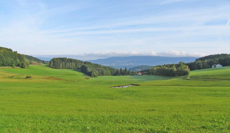 Ausblick (© Greiner)