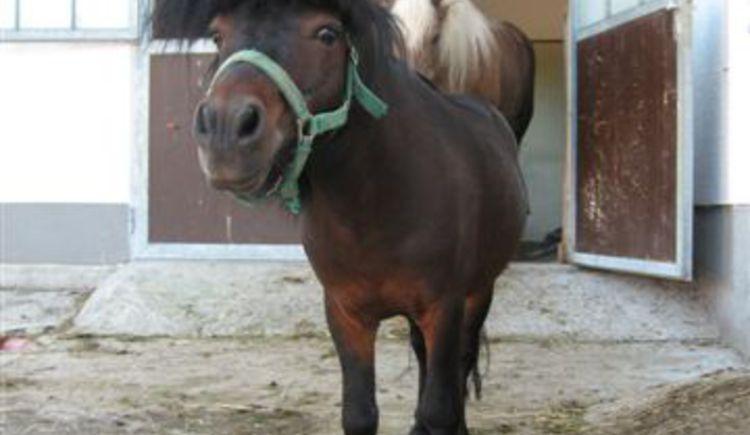 Pferd. (© Tourismusverband Ebenau)