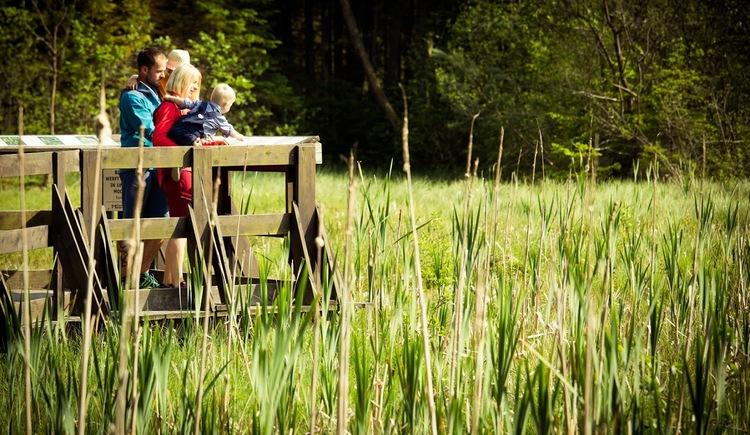 Aussichtskanzel Moor (© Vortuna Gesundheitsresort Bad Leonfelden)