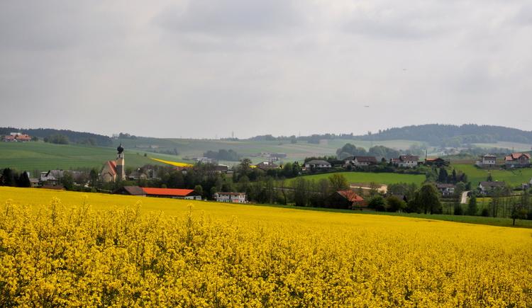 Treubach, Rapsfeld, Innviertel. (© Treubach/Dachs)