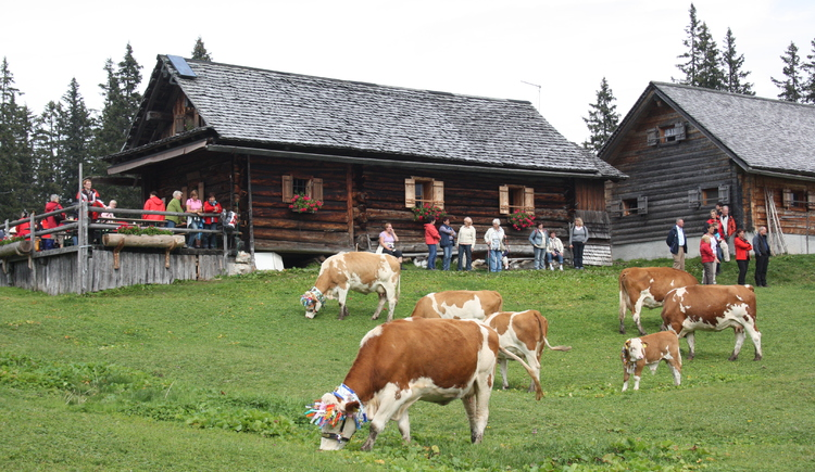 Cows at the Leutgeb hut. (© Grill Elisabeth)