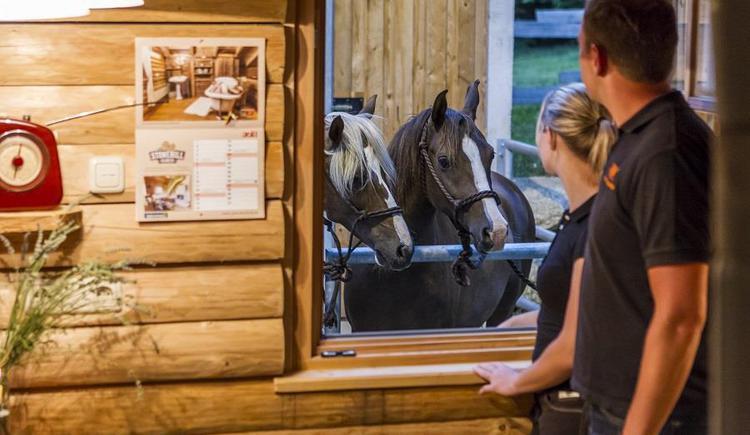 Urlaub mit dem Pferd (© Fotografie Kastner)