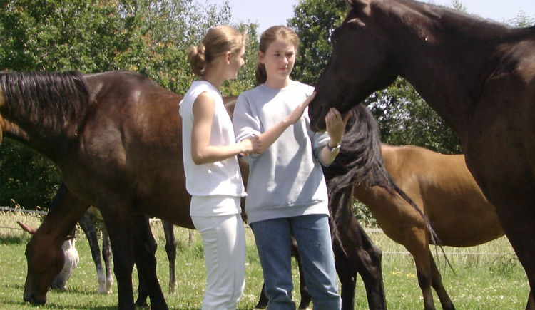 Gutmütige Pferde am ***Ramlhof (© ***Sportpension Ramlhof)