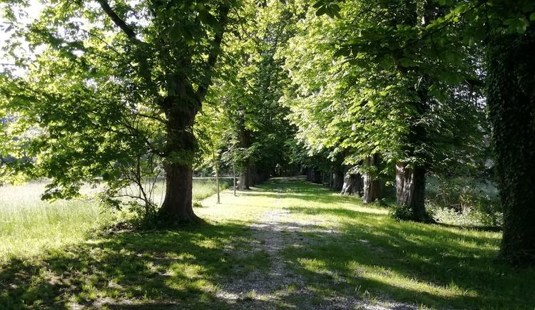 Rundweg Schlosspark (© Innviertel Tourismus)