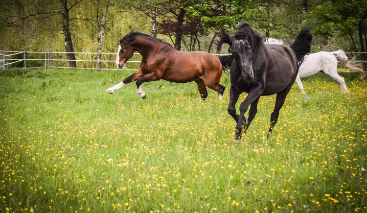 Pferde (© Kristina Gould)