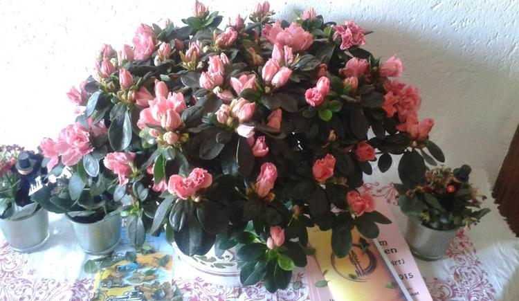 Blumen Zimmer