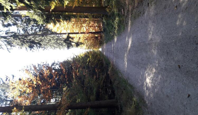 Waldspaziergänge (© Bauer Christina)