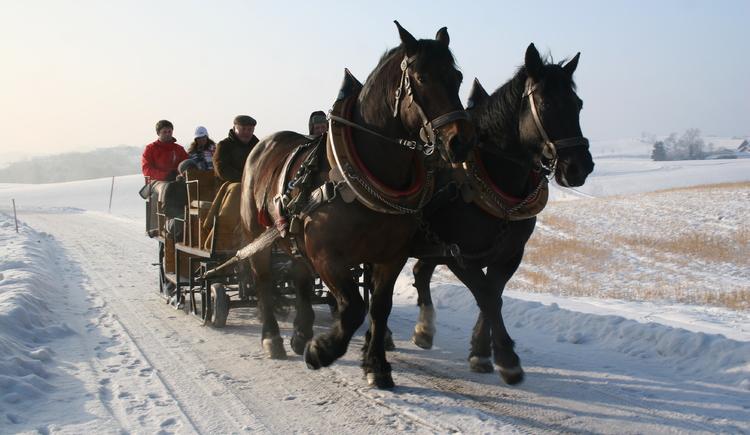 pferdeschlittenfahrt-031-2011-01-05