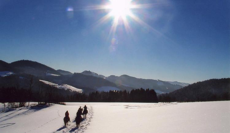 Reiten, Wanderreiten, Winterlandschaft; Pferdereich Mühlviertler Alm. (© Mühlviertler Alm/Reitpark Gstöttner)