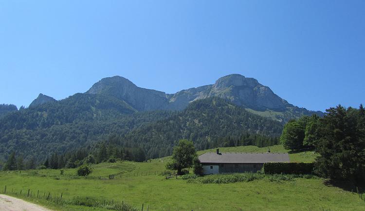 Blick über eine Almlandschaft ohne Tiere. Rechtsbündig eine Almhütte, im Hintergrund Wälder und der Schafberg sowie die Spinnerin als thronende Berge vor blauem Himmel.