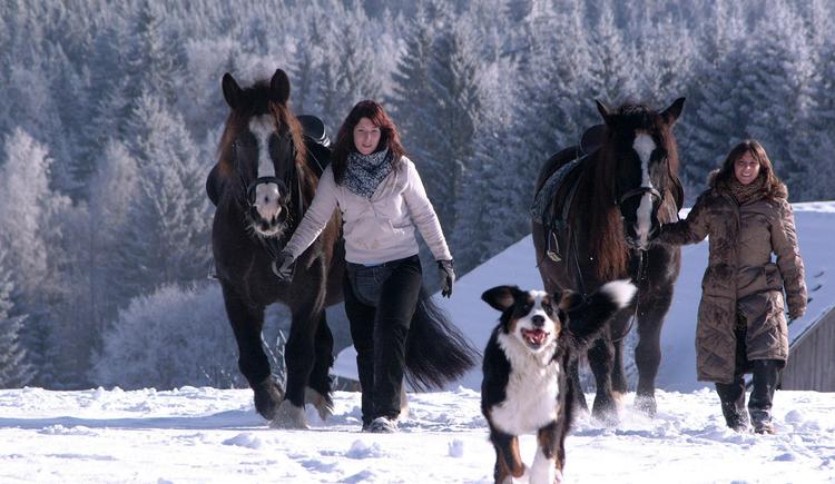 Winterzauber mit Pferd und Hund, Wanderreiten Pferdereich Mühlviertler Alm. (© Mühlviertler Alm/Felix Kern)