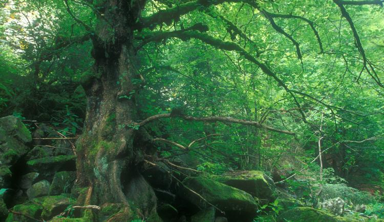 Pflanzenwelt Rannatal (© Josef Limberger)