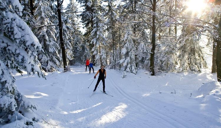 Langlaufen in einer zauberhaften Landschaft - Ferienregion Böhmerwald. (© OÖ.Tourismus/Weissenbrunner)