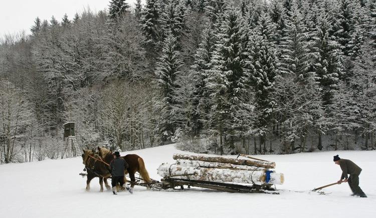 Waldarbeiten im Winter (© Innviertel Tourismus/Litzlbauer)