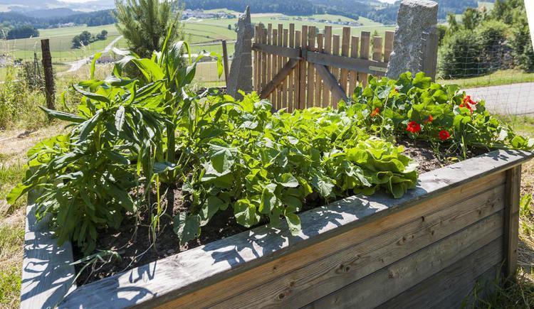 Pflanzen fürs Hochbeet