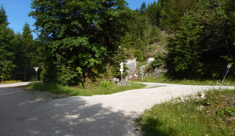 The forest road behind the mountain hotel Predigstuhl leads to the Radsteig.\n
