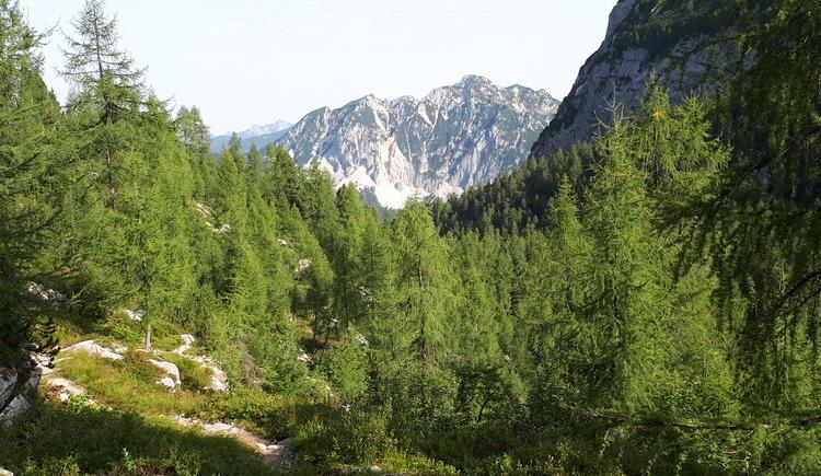 Wanderung zur Bergmesse am Zwölferkogel