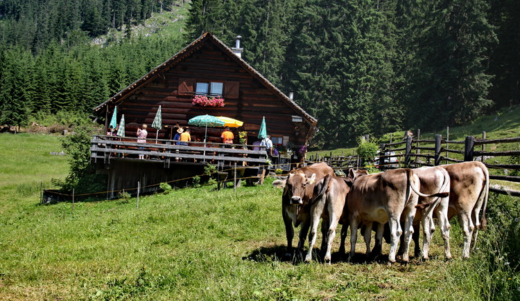the alpine pasture with cows in front of it