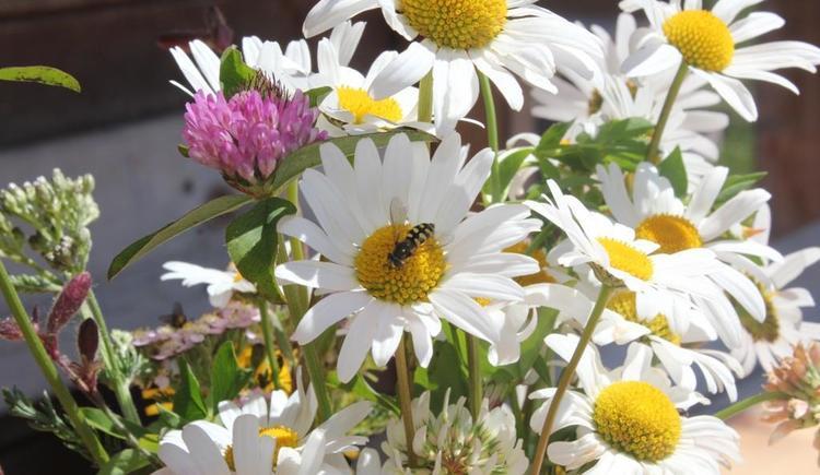 Reithütte Familie Mösenbichler Hintersee Blume 1 (© Familie Mösenbichler)