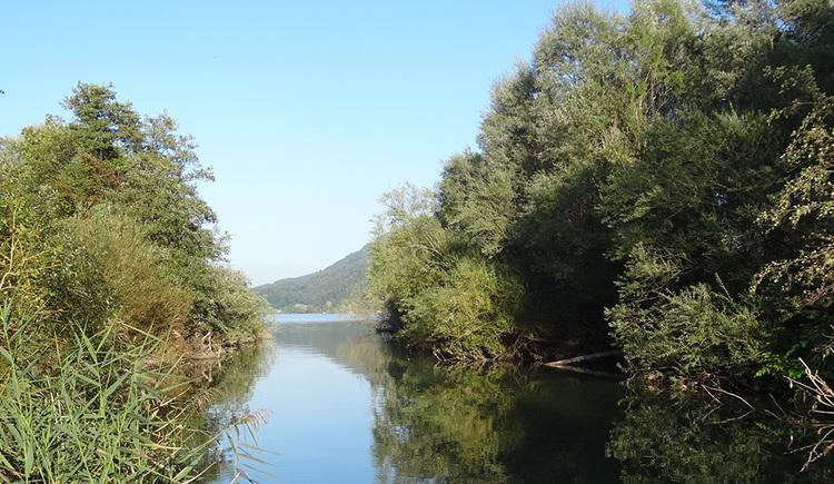 Das Bild zeigt die Mündung der Fuschler Ache, mittig den im Mondsee verlandenden Fluss begleitet links und rechts am Ufer von Auwaldbeständen.
