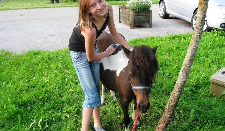 Pony. (© Tourismusverband Ebenau)