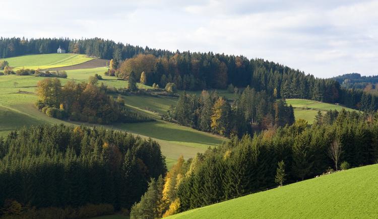 Herbstliche Landschaft mit Blick auf das Kammerer Kreuz, Johannesweg, Mühlviertler Alm. (© OÖ Tourismus/Erber)