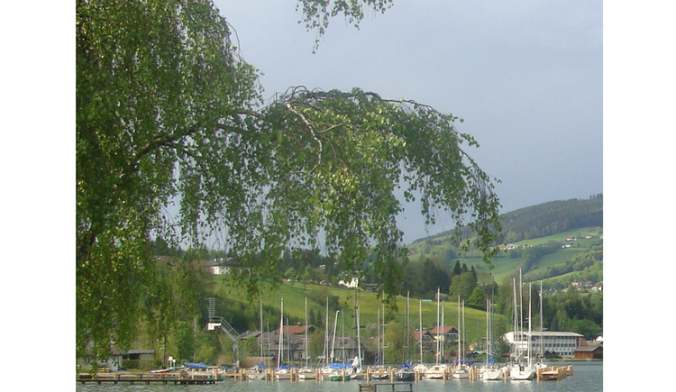 View of the sailing boats in the lake, in the foreground a tree, in the background landscape