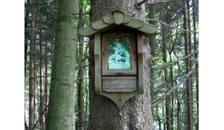 Blick auf das Bild an einem Baum im Wald