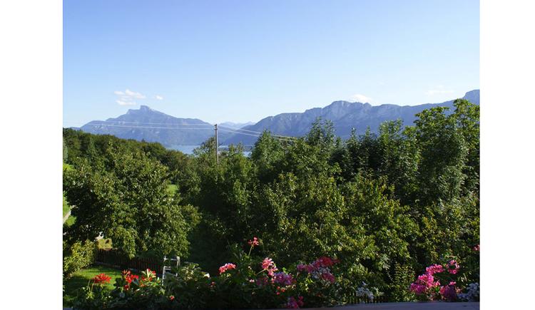 Blick vom Balkon mit Blumen auf den Wald, im Hintergrund die Berge