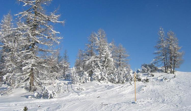 Winterlandschaft (© Leslie Sedlak)
