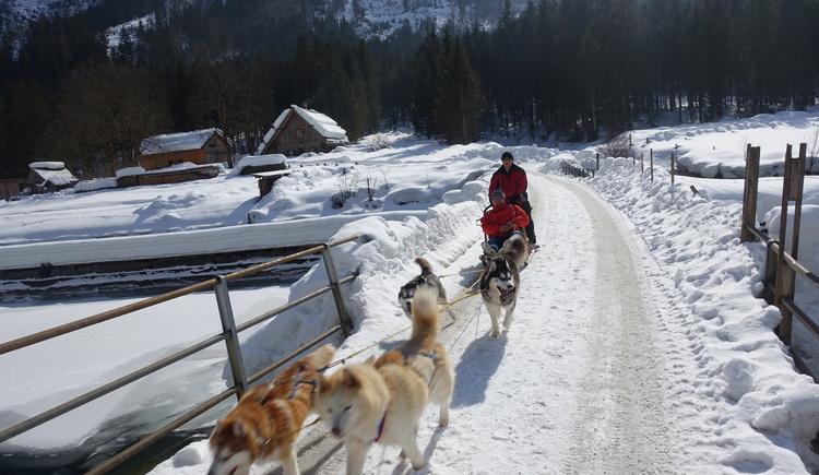 Husky-Schlittenfahrten - im Hochwinter ab unserer Hütte (© Knappe-Benesteem)