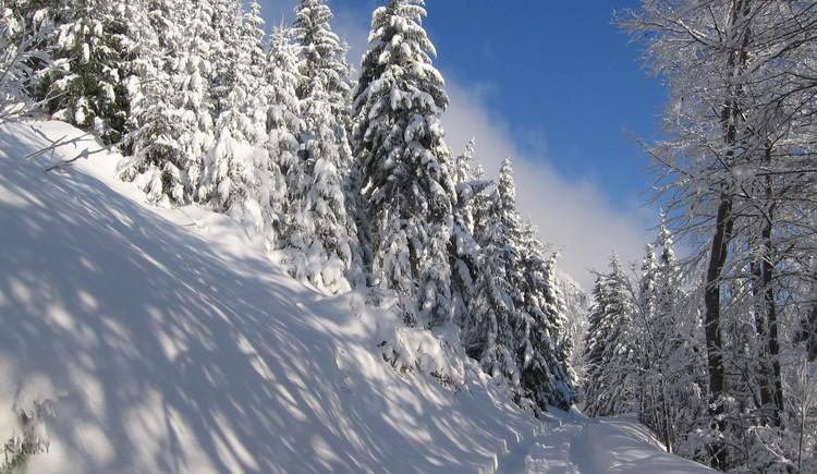 Ferien auf Bergbauernhof Prenn
