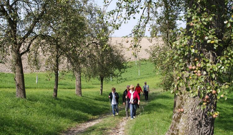 Wandern im Naturpark (© Naturpark Obst-Hügel-Land)