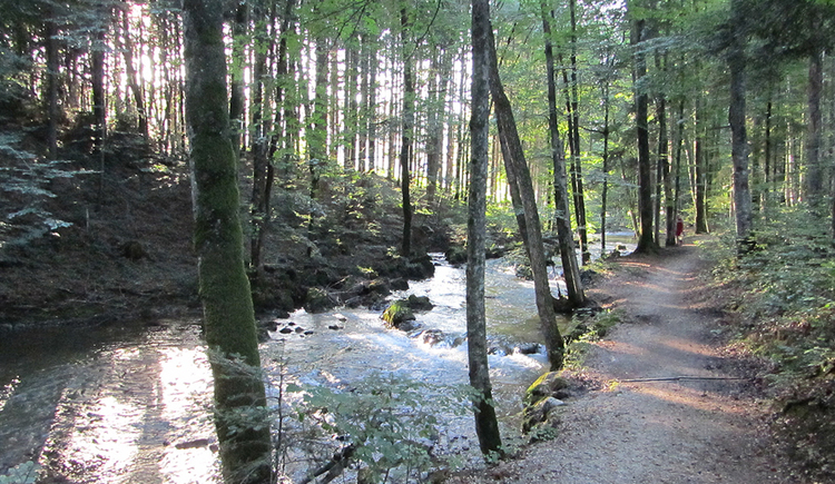 Rechts im Bild ein geschotterter Wanderweg linksseitig flankiert von der Zeller Ache. Am Ufer und im Hintergrund Bäume (Wald). Sonnenstrahlen werden von den Stämmen gebrochen und ergeben ein romantisches Licht. (© www.mondsee.at)