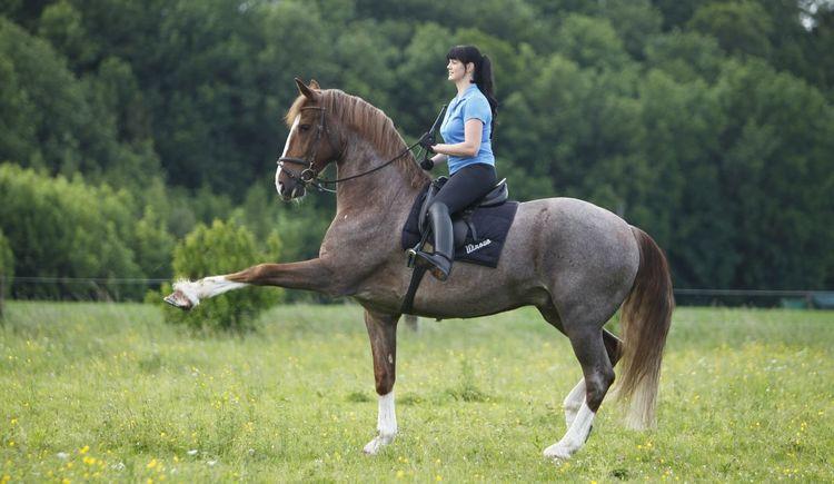 Pferde, Ponys, Natur, Horse Training Center Hellmayr, HTC Hellmayr, Horse Leadership, Freizeit. (© Christiane Slawik / www.slawik.com)