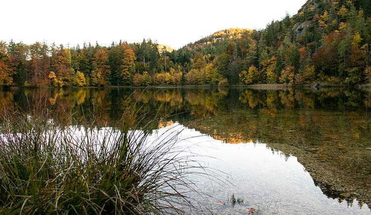Der Eibensee im Herbst (© © TVB Mondsee-Irrsee)