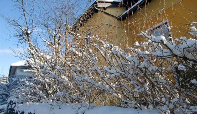 Winter (© anni)