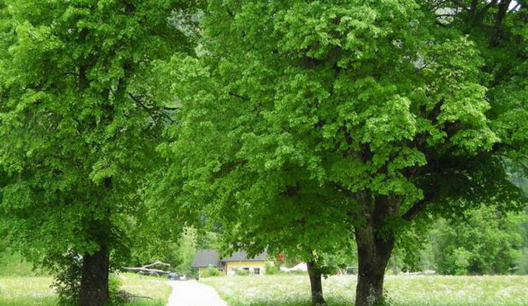 Frühling in Faistenau